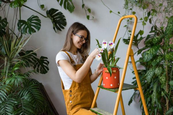 Tips para cuidar las plantas de interior